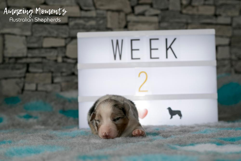 1_Hope_Week2