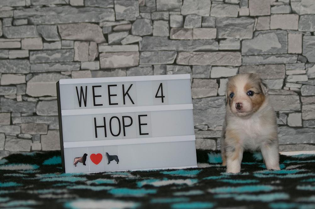 1_Hope_Week4