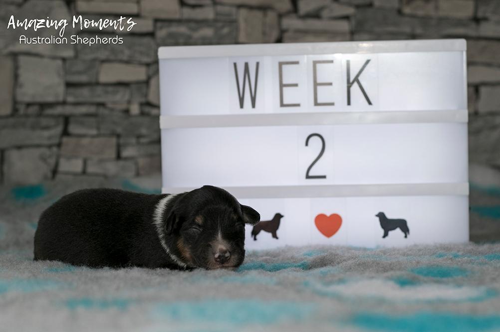 3_Zoey_Week2