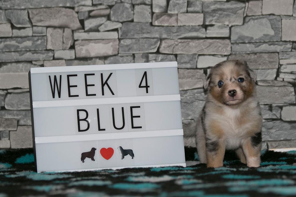 4_Blue_Week4