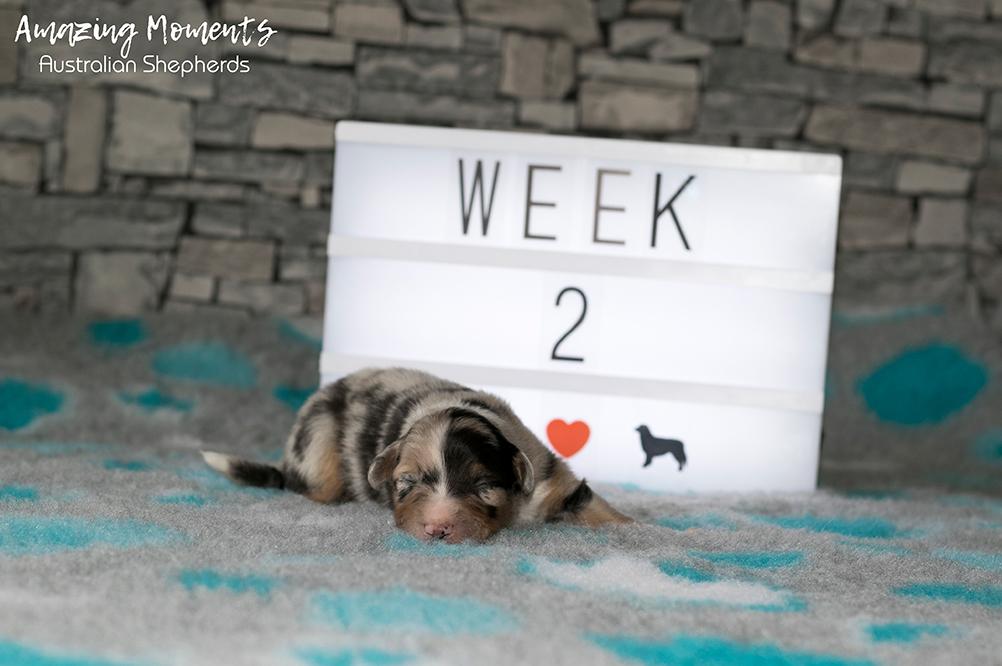 5_Sky_Week2