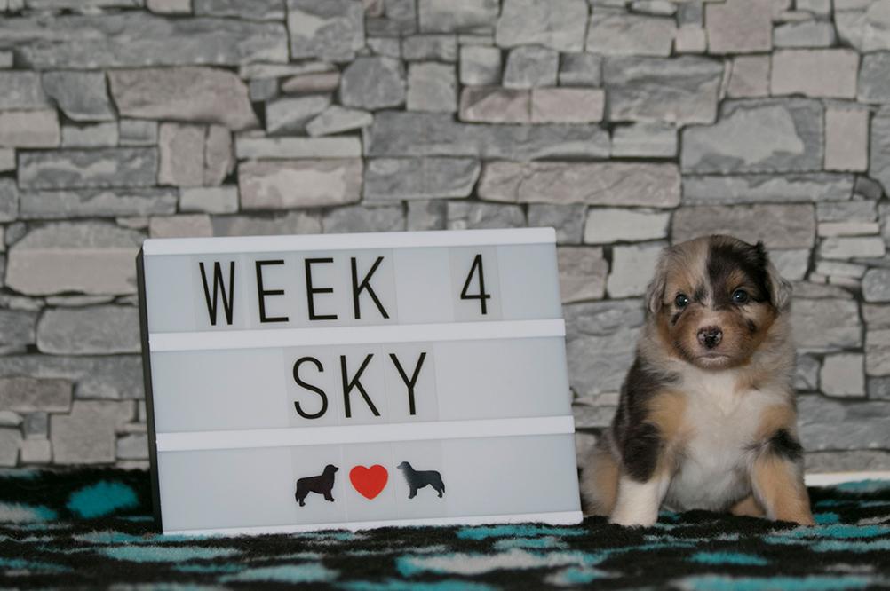 5_Sky_Week4
