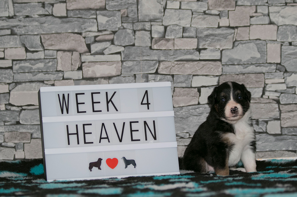 6_Heaven_Week4