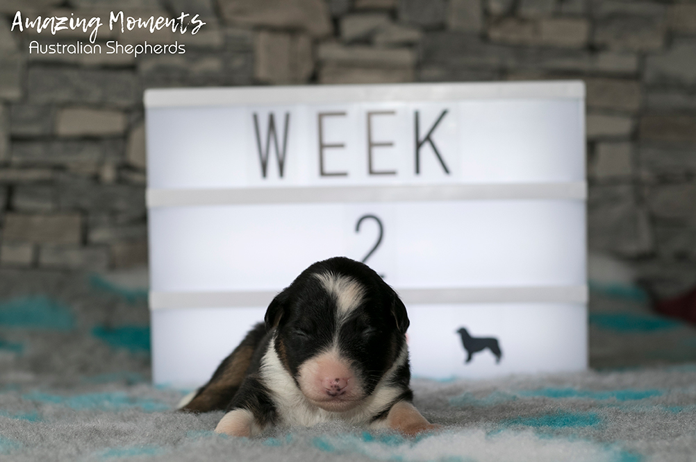 7_Kate_Week2