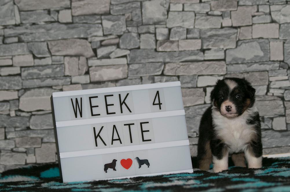 7_Kate_Week4