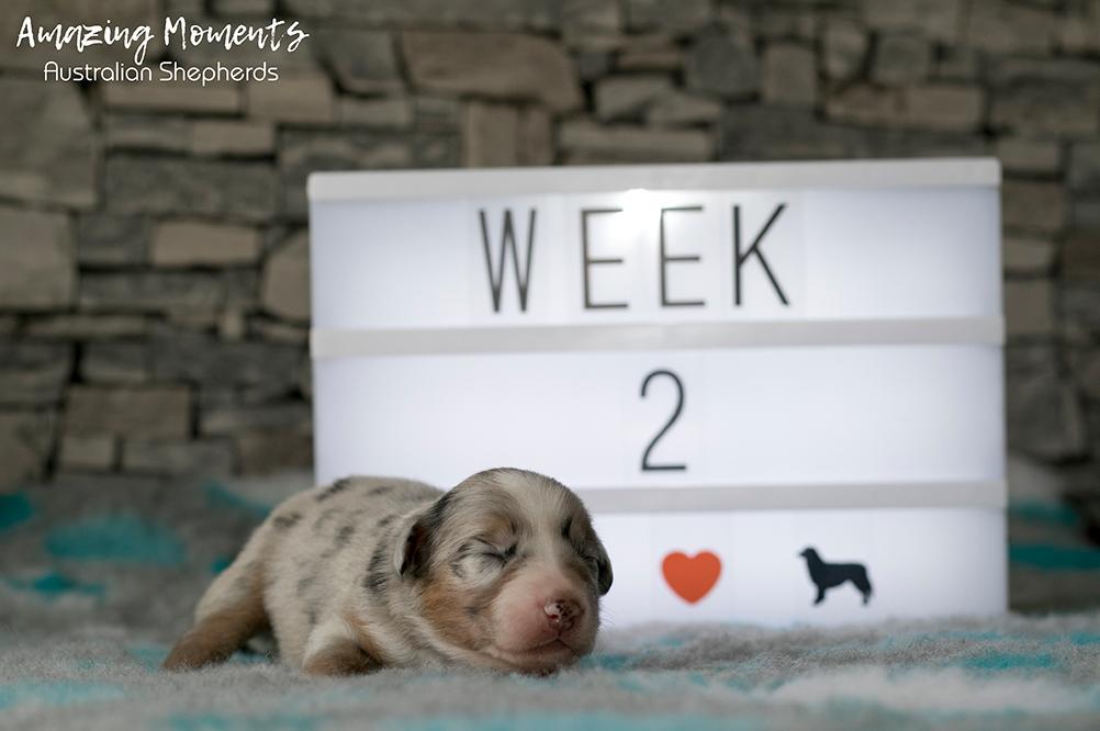 8_Megan_Week2