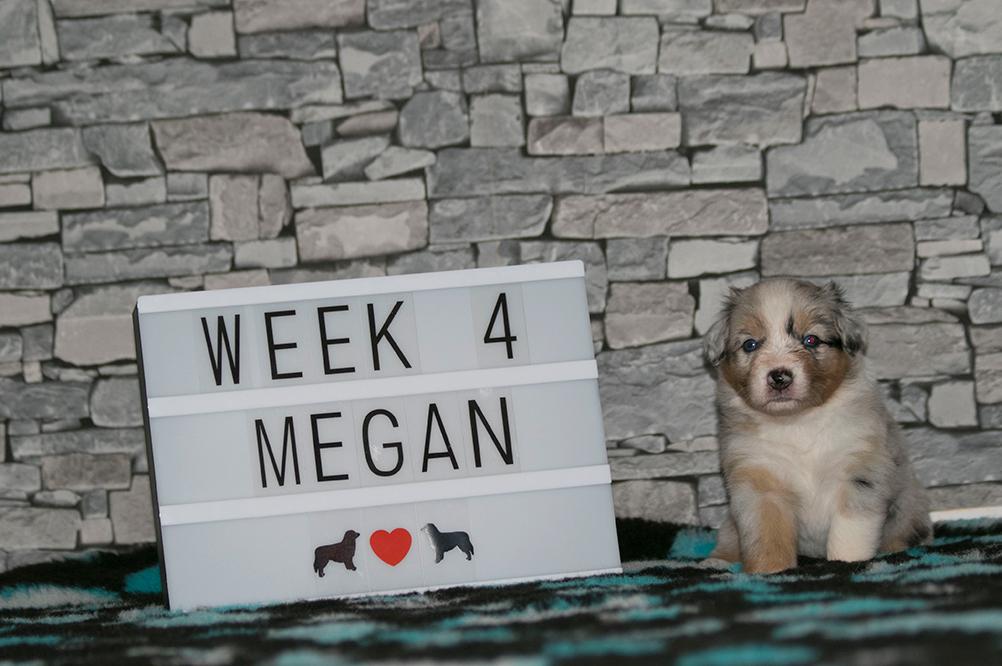 8_Megan_Week4